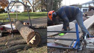 Picking Up and Slabbing a Walnut Tree